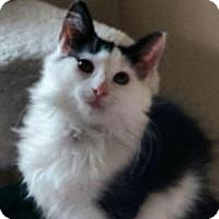 Adopt A Pet :: Chicha - East Hanover, NJ
