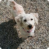Adopt A Pet :: Mae West - Adoption Pending - Mukwonago, WI