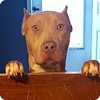 Adopt A Pet :: Oliver - Aurora, IL