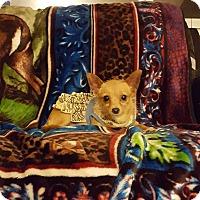 Adopt A Pet :: Lollipup - Sacramento, CA
