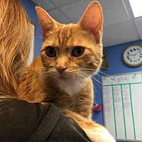 Adopt A Pet :: NOODLE - Canfield, OH