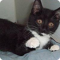 Adopt A Pet :: Peppermint - Secaucus, NJ