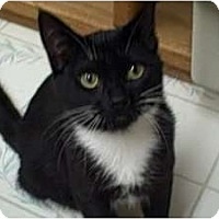 Adopt A Pet :: Gracie - Moses Lake, WA