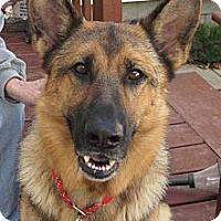 Adopt A Pet :: portia - Wallaceburg, ON