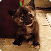 Adopt A Pet :: Bacall - Ocala, FL