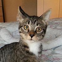 Adopt A Pet :: Dylan - Lago Vista, TX