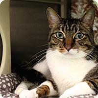 Adopt A Pet :: Luna - Foothill Ranch, CA