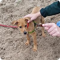 Adopt A Pet :: Brian Flannagan - Chicago, IL
