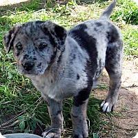 Adopt A Pet :: Ariel - Waller, TX