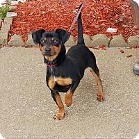 Adopt A Pet :: Bruno - North Judson, IN