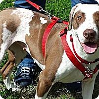 Adopt A Pet :: Ginger - Kingwood, TX