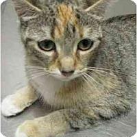 Adopt A Pet :: Quilty - Jenkintown, PA