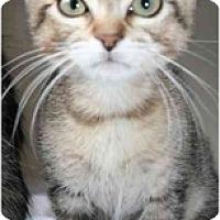 Adopt A Pet :: Mick - Davis, CA