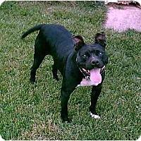 Adopt A Pet :: Brooklyn - Gainesboro, TN