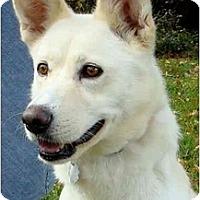 Adopt A Pet :: BELLA - Wakefield, RI