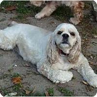 Adopt A Pet :: Sophie - Sugarland, TX
