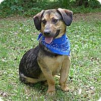 Adopt A Pet :: Justin - Mocksville, NC