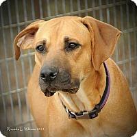 Adopt A Pet :: Otis - Quinlan, TX