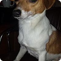 Adopt A Pet :: Tater in Bossier City, LA - Dallas/Ft. Worth, TX