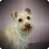 Adopt A Pet :: EGGNOG (video) - Los Angeles, CA