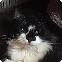 Adopt A Pet :: A..  Rhett - Charlotte, NC