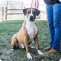 Adopt A Pet :: Angus - Naperville, IL