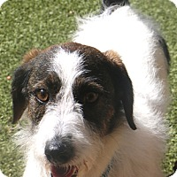 Adopt A Pet :: Rothchild - Allentown, PA
