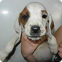 Adopt A Pet :: Eric - South Jersey, NJ