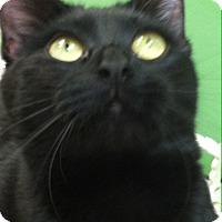 Adopt A Pet :: Wiska - Trevose, PA