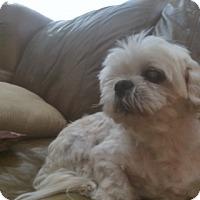 Adopt A Pet :: STEVIE - Riverside, CA