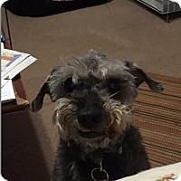 Adopt A Pet :: Wonder - Laurel, MD