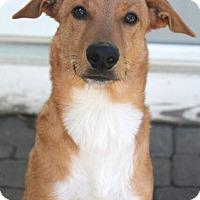Adopt A Pet :: Bert - Mt. Prospect, IL