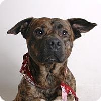 Adopt A Pet :: Brian - Redding, CA