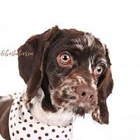 Adopt A Pet :: Reese 3182 - Toronto, ON
