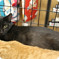 Adopt A Pet :: Tink - Rochester, MN
