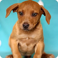 Adopt A Pet :: Lucy - Waldorf, MD
