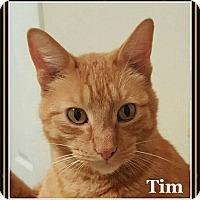 Adopt A Pet :: Tim - Bentonville, AR