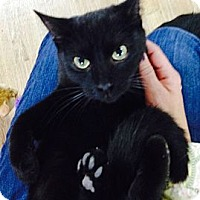 Adopt A Pet :: Kaden - Monroe, GA