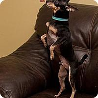 Adopt A Pet :: Morty - Davie, FL