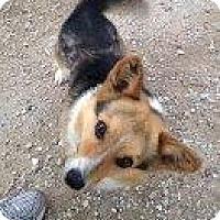 Adopt A Pet :: Sparky - Alliance, NE