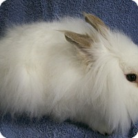 Adopt A Pet :: Ringo - Harrisburg, PA