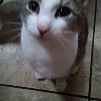 Adopt A Pet :: CHERRY - Ocala, FL