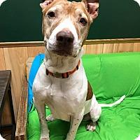 Adopt A Pet :: Alexis - Maryville, MO