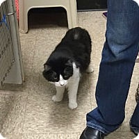 Adopt A Pet :: Teddy - Colmar, PA
