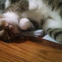 Adopt A Pet :: DAISY - Glen cove, NY