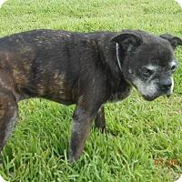 Adopt A Pet :: shika - haslet, TX