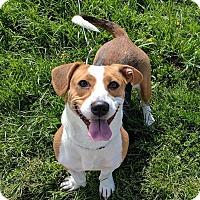 Adopt A Pet :: Winona- Adoption Pending - Lisbon, OH