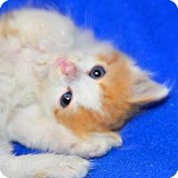 Adopt A Pet :: Jamie - Buford, GA