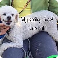 Adopt A Pet :: Tuff - Barrington, RI