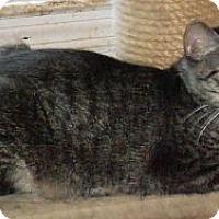 Adopt A Pet :: Dixie - Jacksonville, NC
